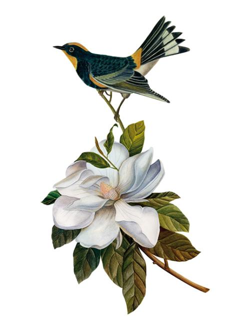 flowerbird_3
