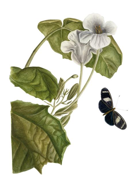 flowerbutterfly_1
